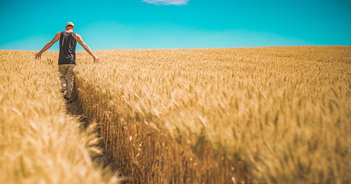 Lazio, il ritorno alla terra: balzo storico del numero di giovani imprenditori in agricoltura