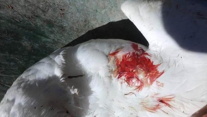 11 oche uccise a fucilate: comunità profondamente scossa dal barbaro gesto